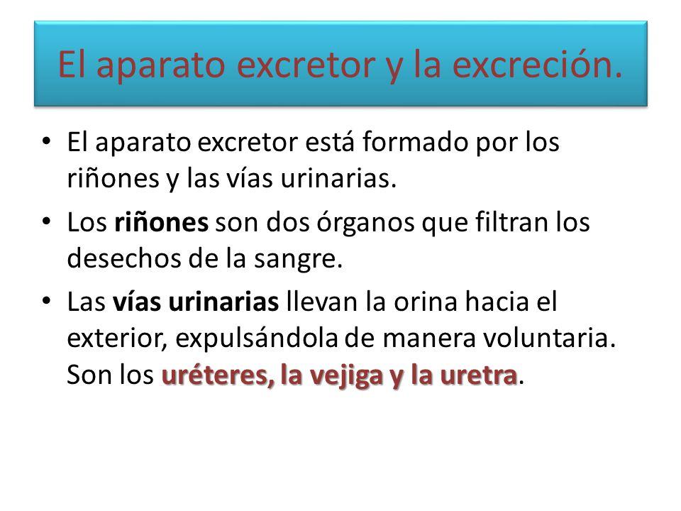 El aparato excretor y la excreción. El aparato excretor está formado por los riñones y las vías urinarias. Los riñones son dos órganos que filtran los
