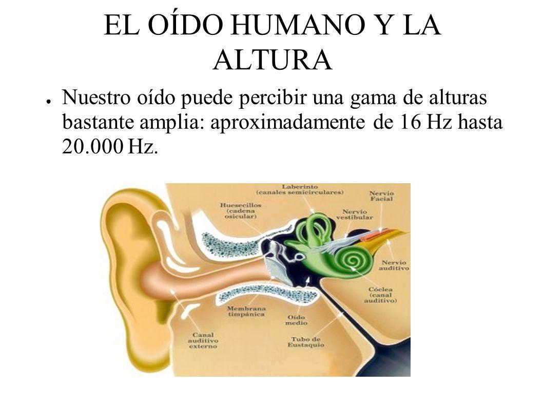 EL OÍDO HUMANO Y LA ALTURA Nuestro oído puede percibir una gama de alturas bastante amplia: aproximadamente de 16 Hz hasta 20.000 Hz.