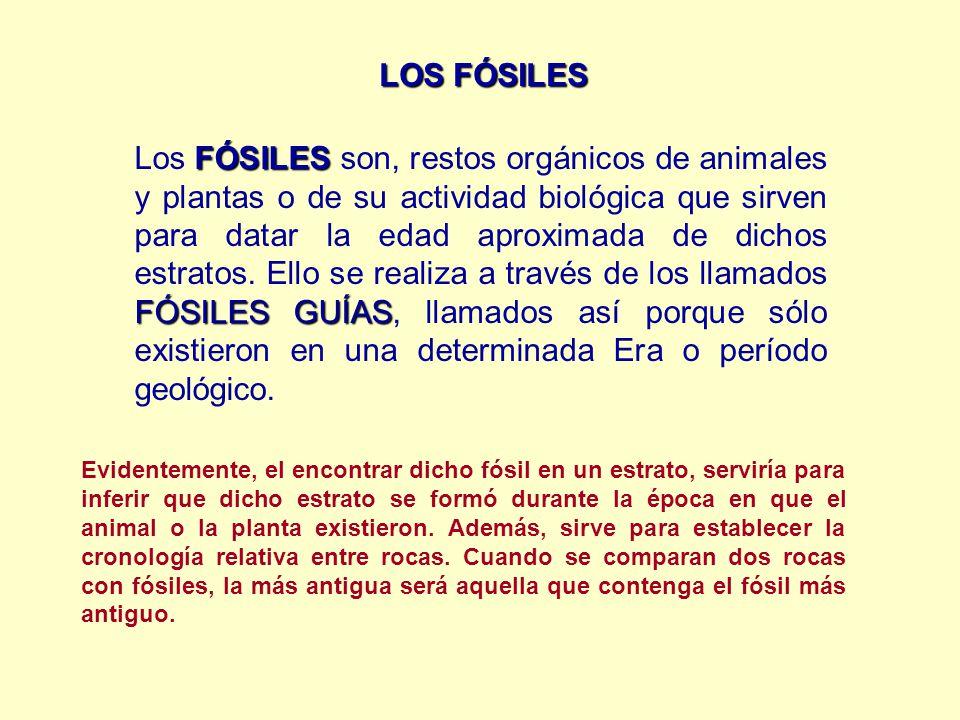 LOS FÓSILES FÓSILES FÓSILES GUÍAS Los FÓSILES son, restos orgánicos de animales y plantas o de su actividad biológica que sirven para datar la edad ap