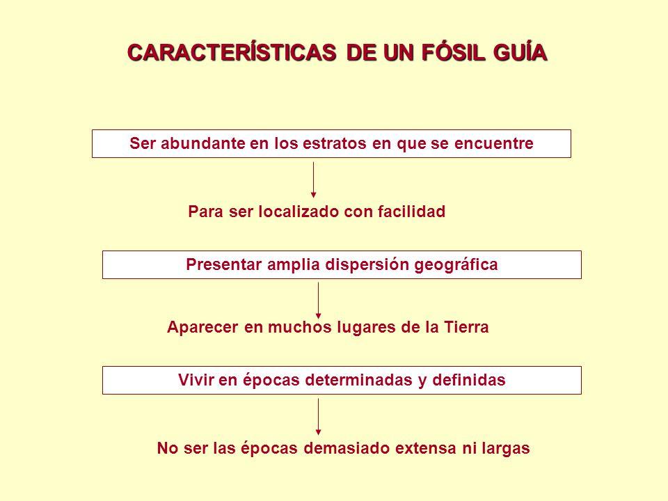 El proceso de fosilización comienza a partir de la desaparición de las partes blandas y el relleno de los huecos por el sedimento circundante.