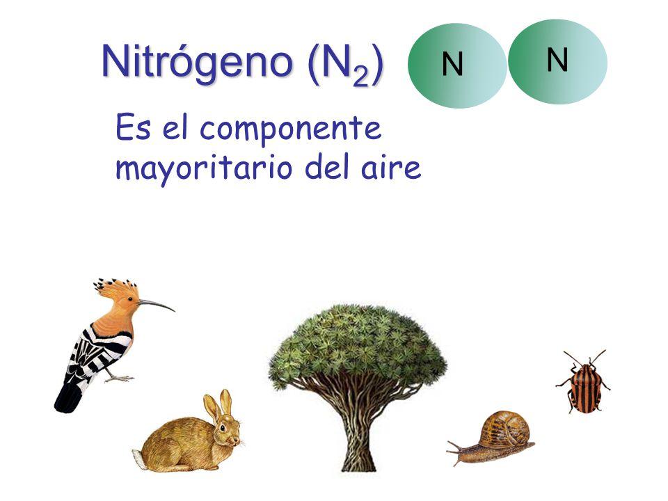 Nitrógeno (N 2 ) Es el componente mayoritario del aire N N Los seres vivos lo necesitan para formar sus proteínas.