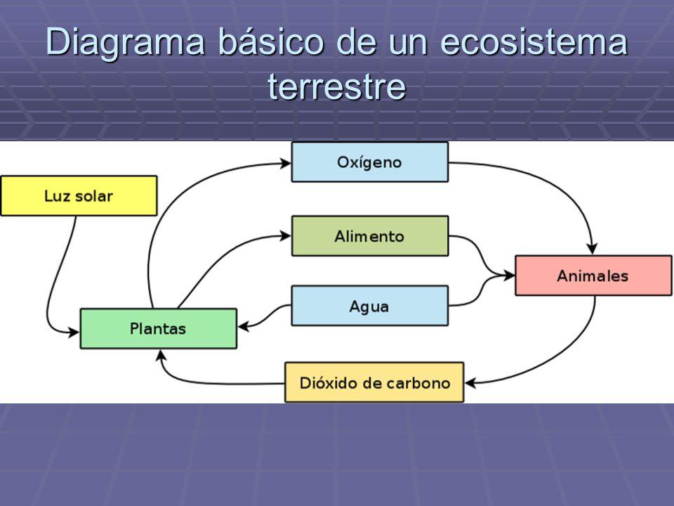 Diagrama básico de un ecosistema terrestre