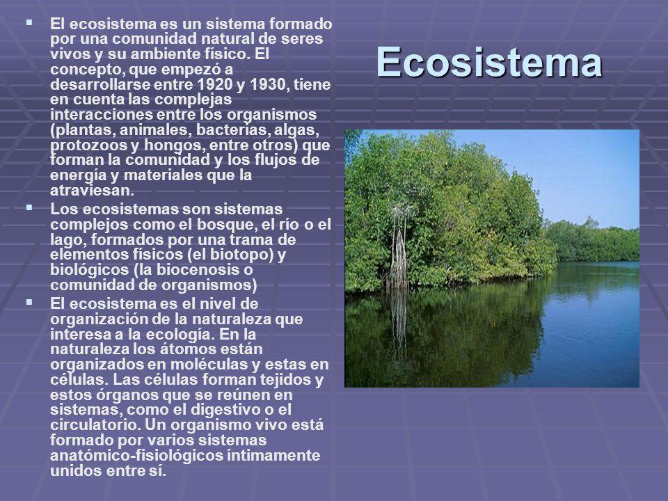Ecosistema El ecosistema es un sistema formado por una comunidad natural de seres vivos y su ambiente físico. El concepto, que empezó a desarrollarse