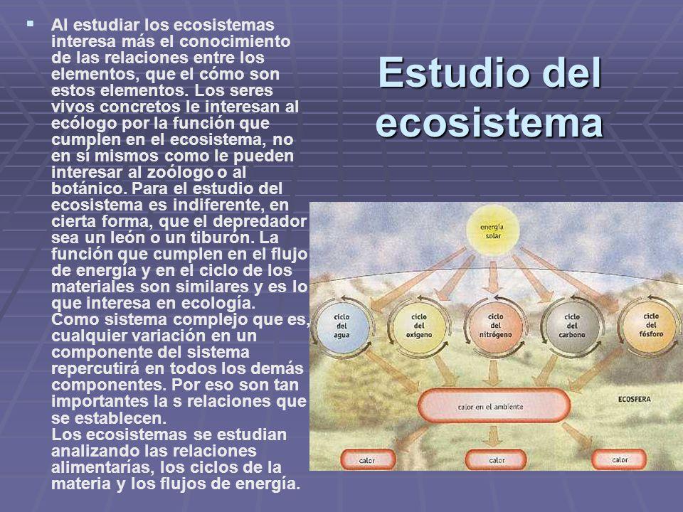 Estudio del ecosistema Al estudiar los ecosistemas interesa más el conocimiento de las relaciones entre los elementos, que el cómo son estos elementos