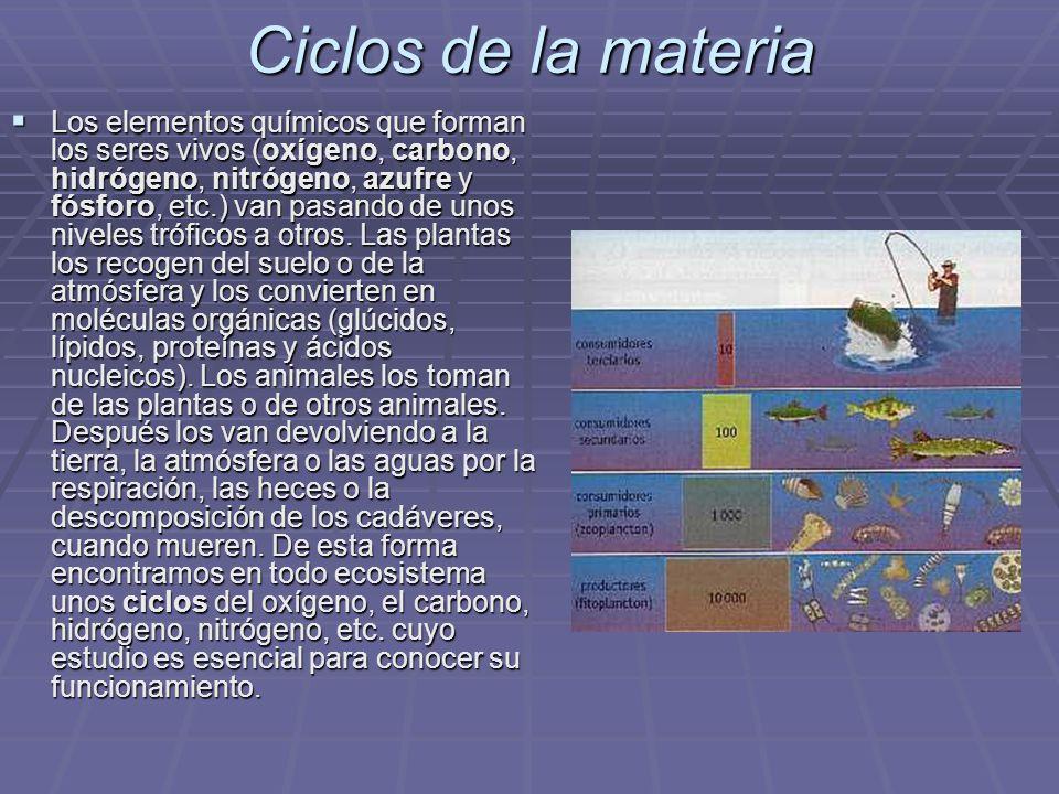 Ciclos de la materia Los elementos químicos que forman los seres vivos (oxígeno, carbono, hidrógeno, nitrógeno, azufre y fósforo, etc.) van pasando de