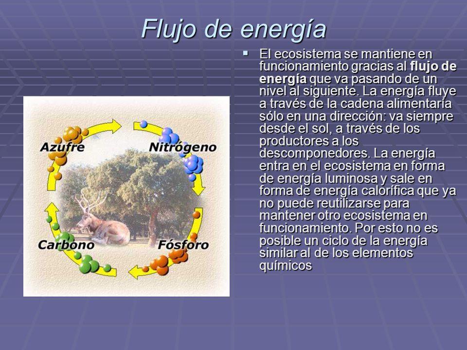 Flujo de energía El ecosistema se mantiene en funcionamiento gracias al flujo de energía que va pasando de un nivel al siguiente. La energía fluye a t