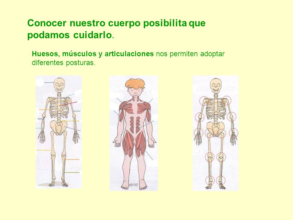 Conocer nuestro cuerpo posibilita que podamos cuidarlo. Huesos, músculos y articulaciones nos permiten adoptar diferentes posturas.