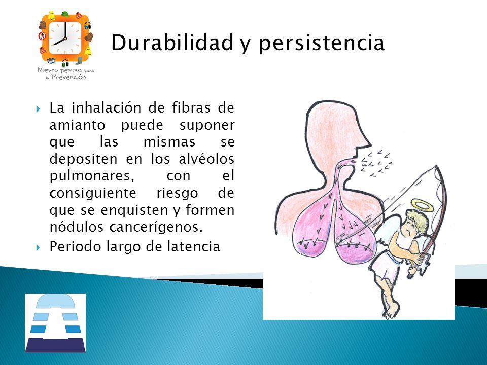 Durabilidad y persistencia La inhalación de fibras de amianto puede suponer que las mismas se depositen en los alvéolos pulmonares, con el consiguient