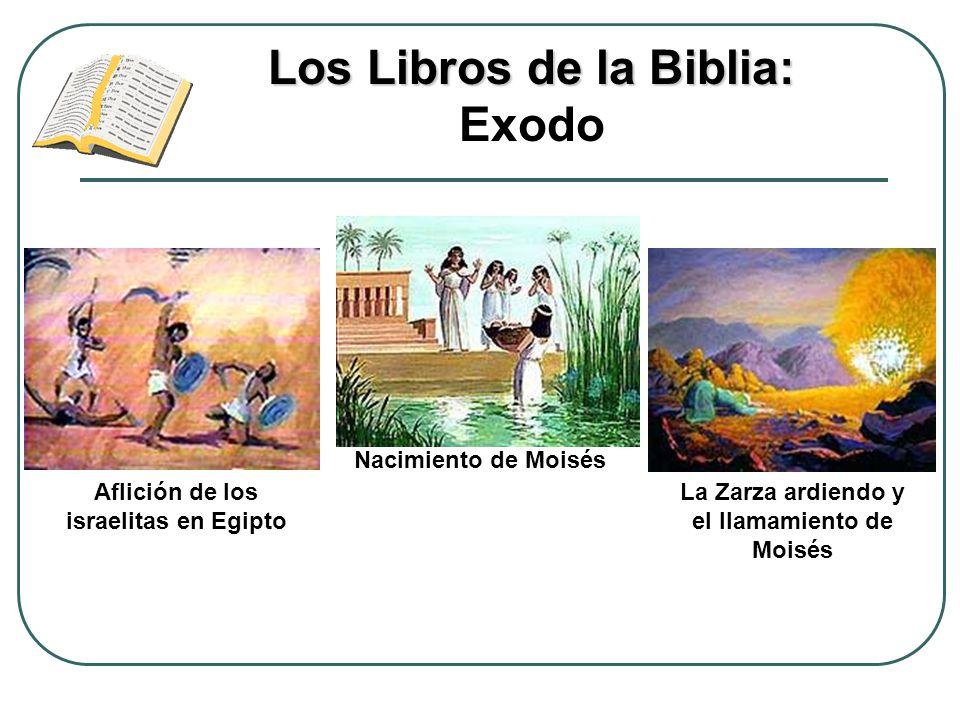 Los Libros de la Biblia: Los Libros de la Biblia: Exodo Aflición de los israelitas en Egipto Nacimiento de Moisés La Zarza ardiendo y el llamamiento d