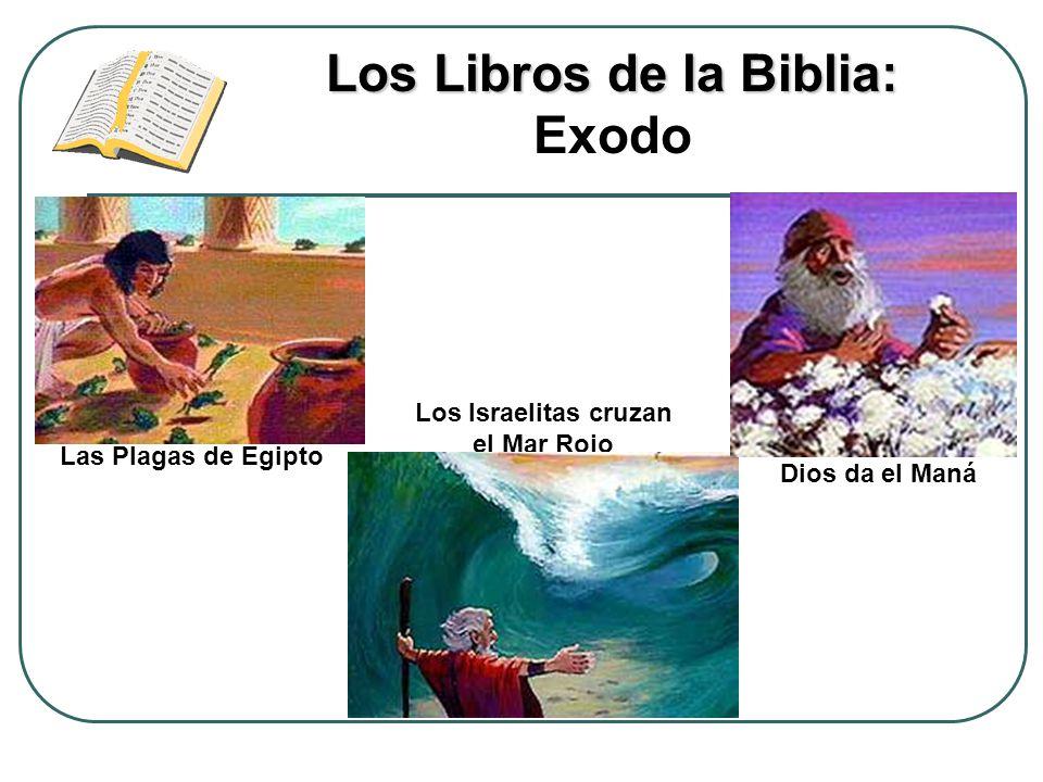 Los Libros de la Biblia: Los Libros de la Biblia: Exodo Las Plagas de Egipto Los Israelitas cruzan el Mar Rojo Dios da el Maná