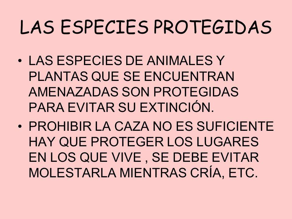 LAS ESPECIES PROTEGIDAS LAS ESPECIES DE ANIMALES Y PLANTAS QUE SE ENCUENTRAN AMENAZADAS SON PROTEGIDAS PARA EVITAR SU EXTINCIÓN. PROHIBIR LA CAZA NO E
