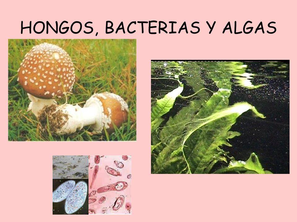 HONGOS, BACTERIAS Y ALGAS