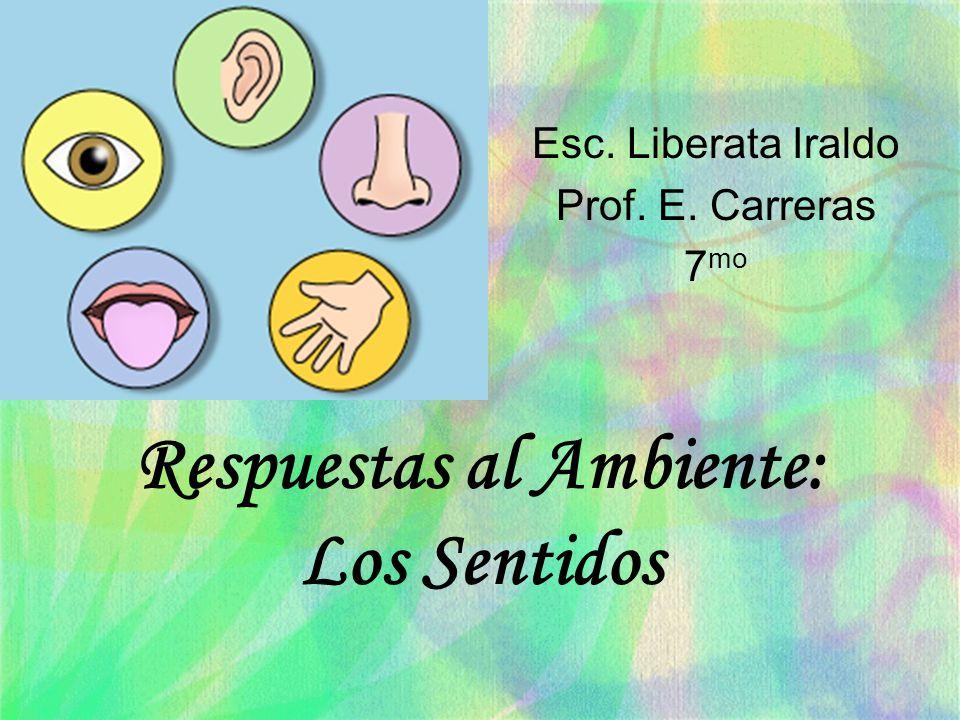 Respuestas al Ambiente: Los Sentidos Esc. Liberata Iraldo Prof. E. Carreras 7 mo