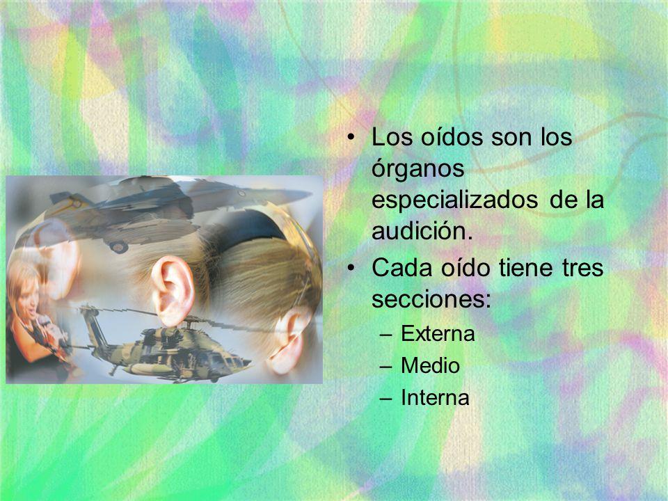 Los oídos son los órganos especializados de la audición. Cada oído tiene tres secciones: –Externa –Medio –Interna
