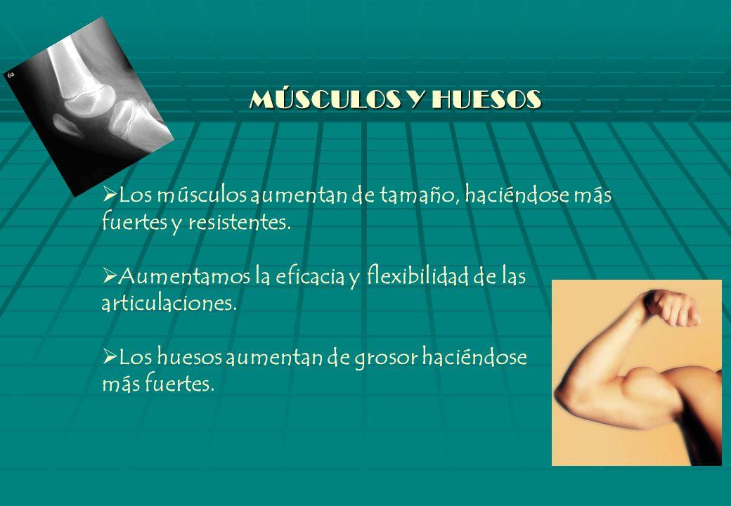 MÚSCULOS Y HUESOS Los músculos aumentan de tamaño, haciéndose más fuertes y resistentes.