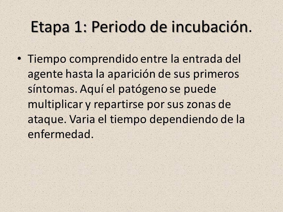Etapa 1: Periodo de incubación Etapa 1: Periodo de incubación. Tiempo comprendido entre la entrada del agente hasta la aparición de sus primeros sínto