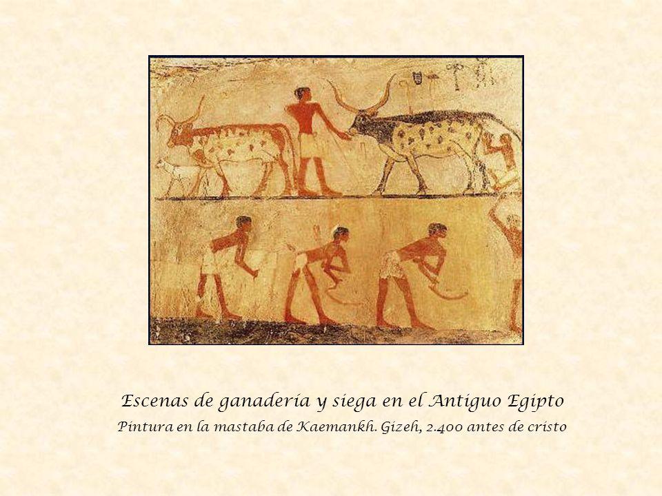Escenas de ganadería y siega en el Antiguo Egipto Pintura en la mastaba de Kaemankh.