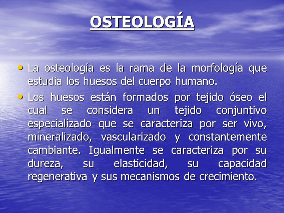 OSTEOLOGÍA La osteología es la rama de la morfología que estudia los huesos del cuerpo humano. La osteología es la rama de la morfología que estudia l