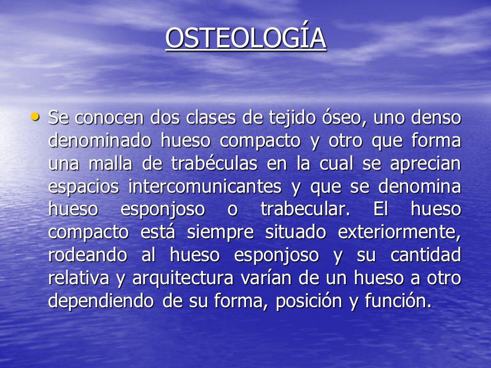 OSTEOLOGÍA Se conocen dos clases de tejido óseo, uno denso denominado hueso compacto y otro que forma una malla de trabéculas en la cual se aprecian e