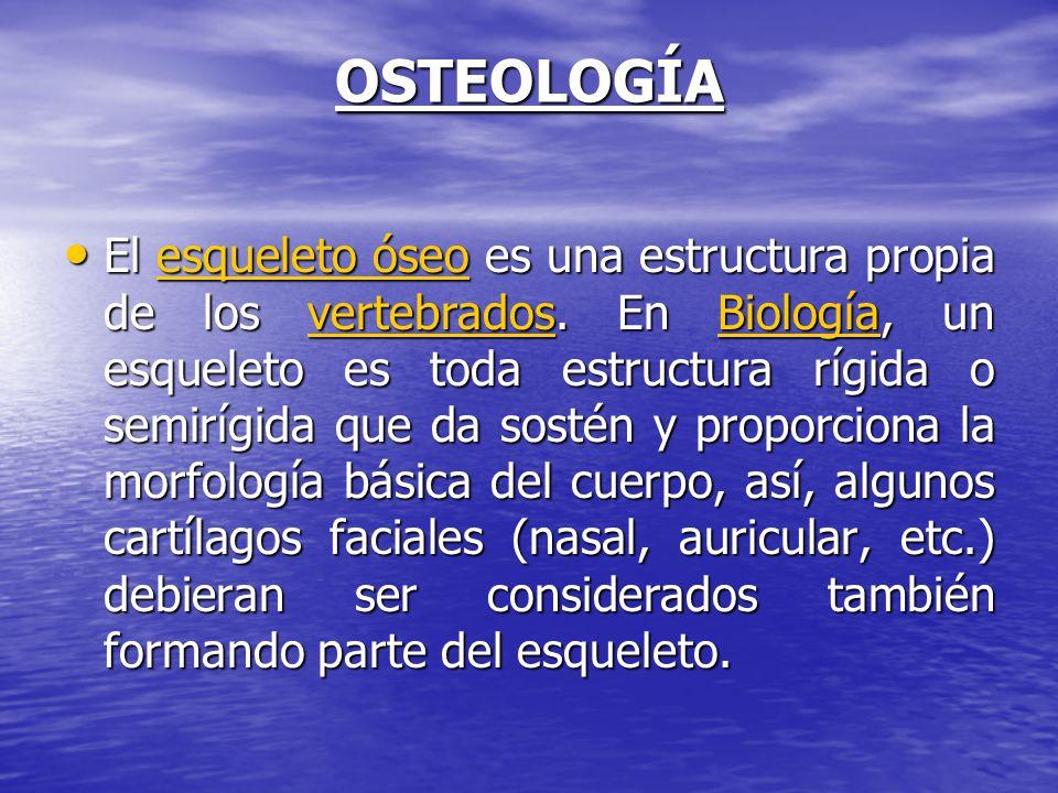 OSTEOLOGÍA El esqueleto óseo es una estructura propia de los vertebrados. En Biología, un esqueleto es toda estructura rígida o semirígida que da sost