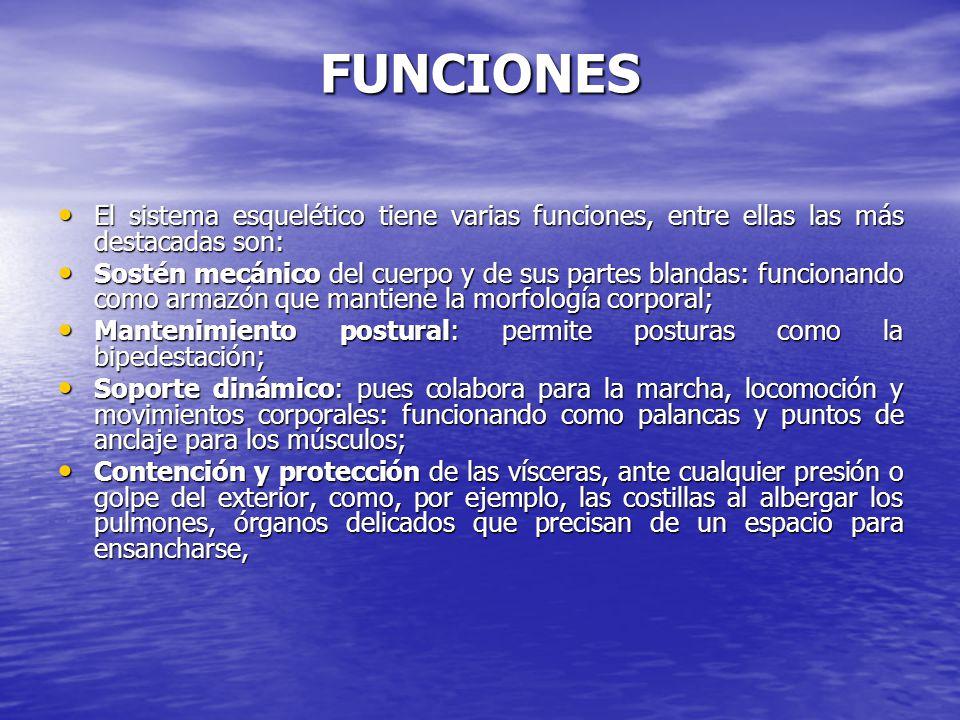 FUNCIONES El sistema esquelético tiene varias funciones, entre ellas las más destacadas son: El sistema esquelético tiene varias funciones, entre ella