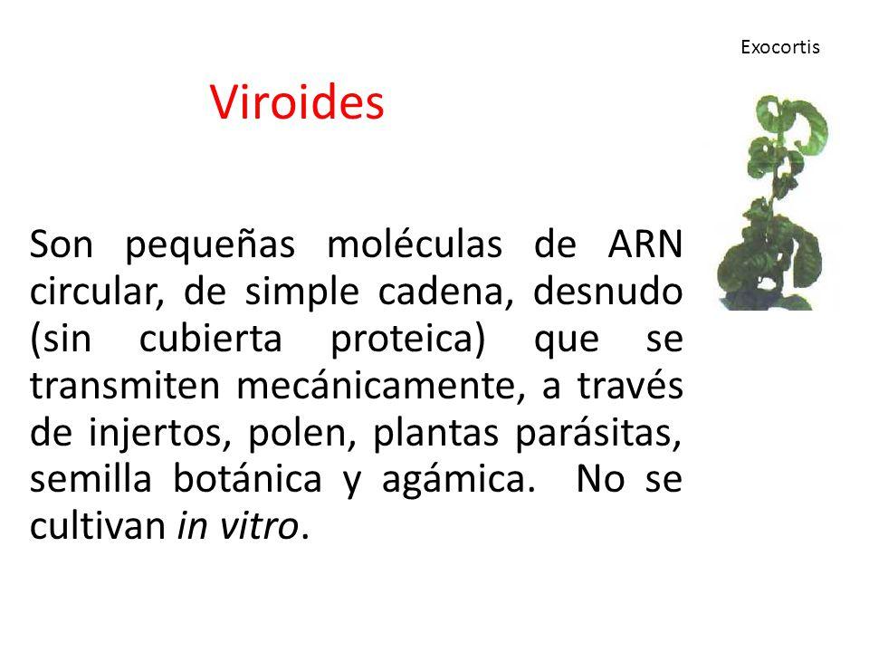 Viroides Son pequeñas moléculas de ARN circular, de simple cadena, desnudo (sin cubierta proteica) que se transmiten mecánicamente, a través de injert