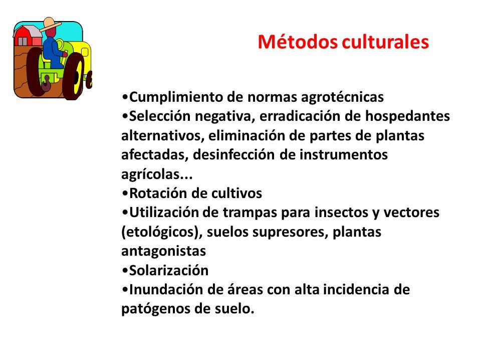 Métodos culturales Cumplimiento de normas agrotécnicas Selección negativa, erradicación de hospedantes alternativos, eliminación de partes de plantas