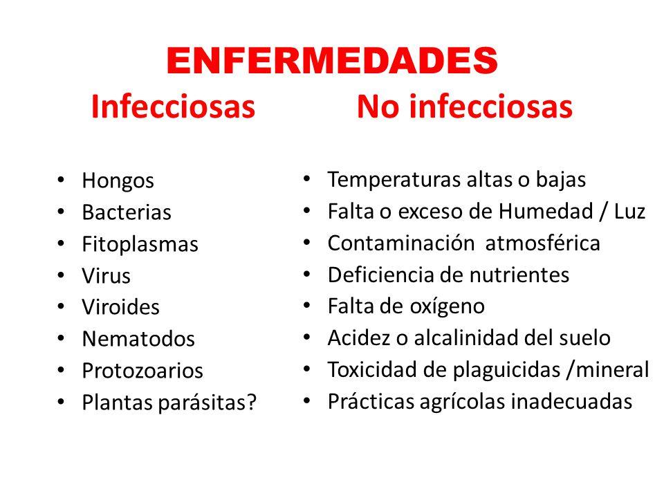 ENFERMEDADES InfecciosasNo infecciosas Hongos Bacterias Fitoplasmas Virus Viroides Nematodos Protozoarios Plantas parásitas? Temperaturas altas o baja
