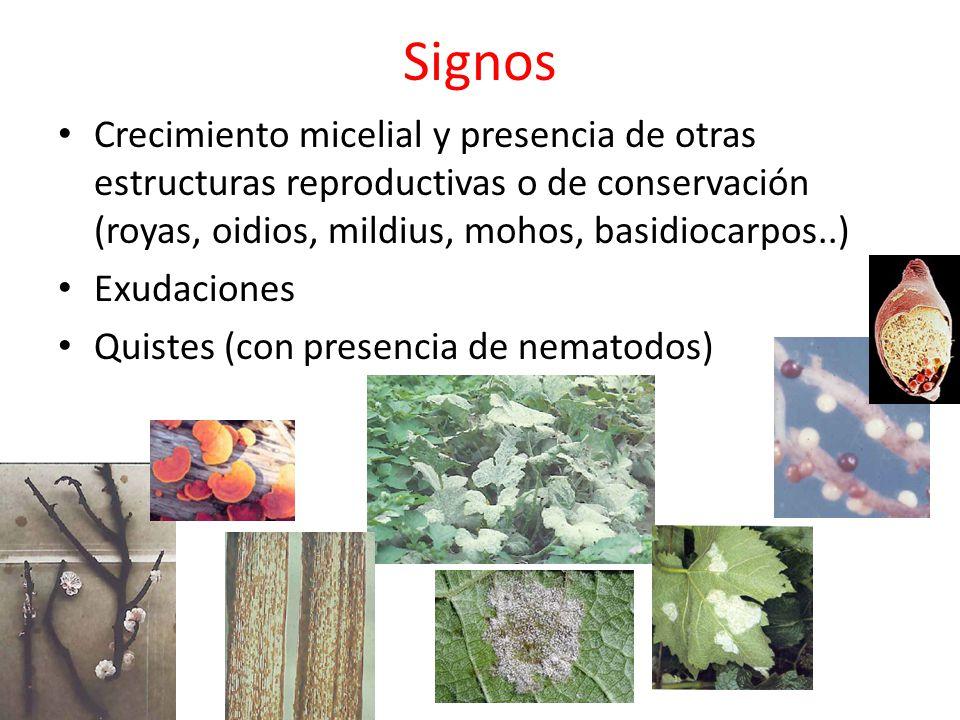 Síntomas y signos producidos por hongos Síntomas cloróticos o necróticos: manchas, mildius, distorsión, antracnosis, cancros, tizones, royas, sarnas, pudriciones, muerte descendente, muerte de las plántulas o de las plantas.