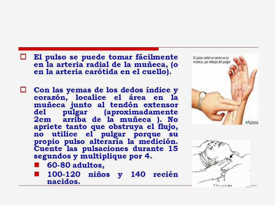 El pulso se puede tomar fácilmente en la arteria radial de la muñeca, (o en la arteria carótida en el cuello).