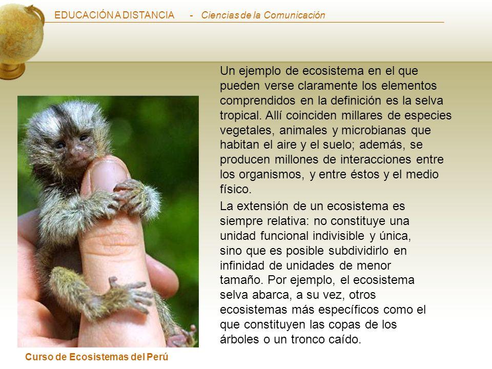 EDUCACIÓN A DISTANCIA Curso de Ecosistemas del Perú - Ciencias de la Comunicación Un ejemplo de ecosistema en el que pueden verse claramente los elementos comprendidos en la definición es la selva tropical.