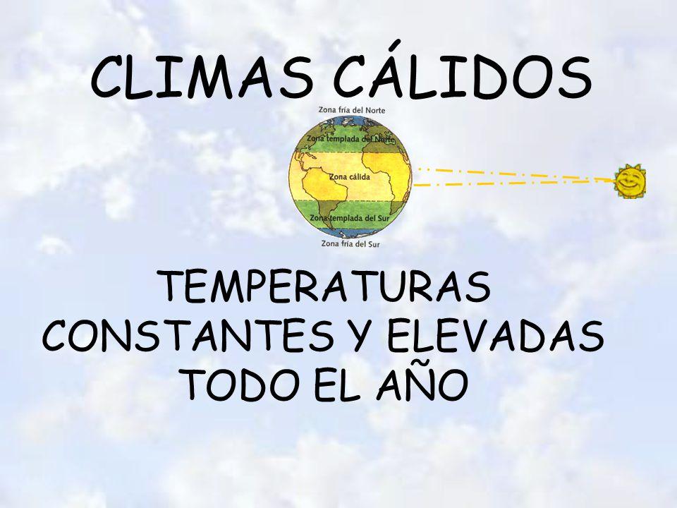 CLIMAS CÁLIDOS TEMPERATURAS CONSTANTES Y ELEVADAS TODO EL AÑO