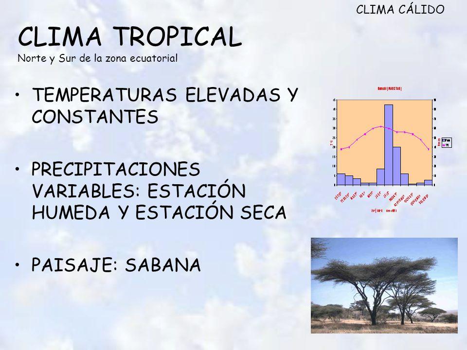 CLIMA TROPICAL Norte y Sur de la zona ecuatorial TEMPERATURAS ELEVADAS Y CONSTANTES PRECIPITACIONES VARIABLES: ESTACIÓN HUMEDA Y ESTACIÓN SECA PAISAJE: SABANA CLIMA CÁLIDO