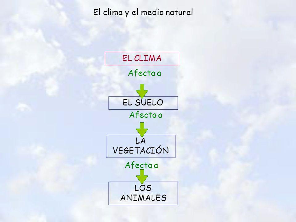 El clima y el medio natural EL CLIMA EL SUELO LOS ANIMALES LA VEGETACIÓN Afecta a