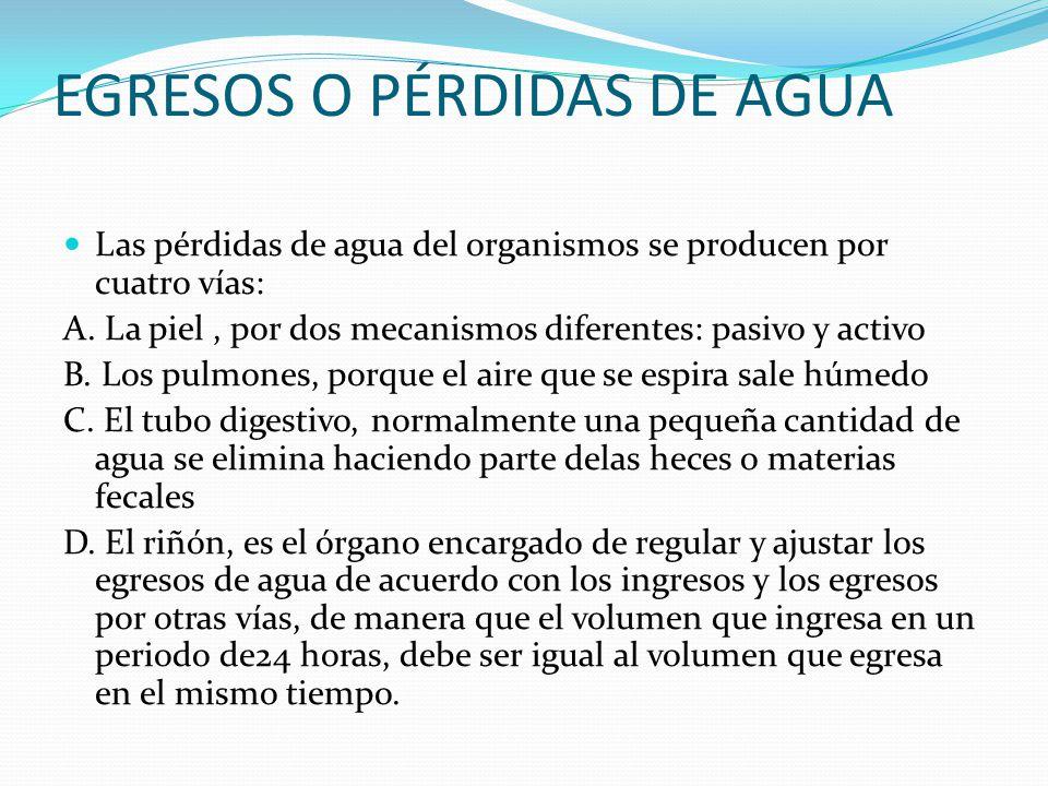 EGRESOS O PÉRDIDAS DE AGUA Las pérdidas de agua del organismos se producen por cuatro vías: A. La piel, por dos mecanismos diferentes: pasivo y activo