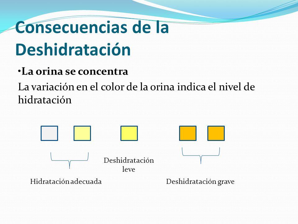 Consecuencias de la Deshidratación La orina se concentra La variación en el color de la orina indica el nivel de hidratación Hidratación adecuada Desh