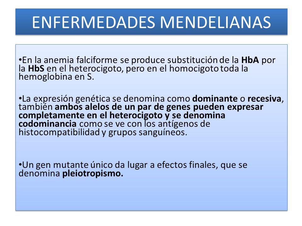 ENFERMEDADES MENDELIANAS En la anemia falciforme se produce substitución de la HbA por la HbS en el heterocigoto, pero en el homocigoto toda la hemoglobina en S.