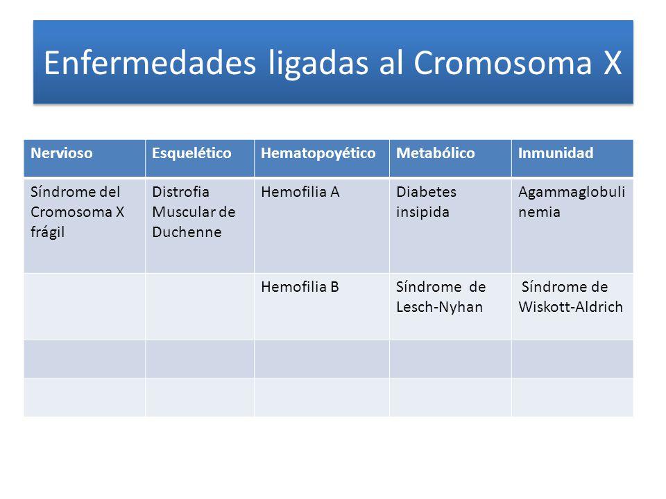 Enfermedades ligadas al Cromosoma X NerviosoEsqueléticoHematopoyéticoMetabólicoInmunidad Síndrome del Cromosoma X frágil Distrofia Muscular de Duchenne Hemofilia ADiabetes insipida Agammaglobuli nemia Hemofilia BSíndrome de Lesch-Nyhan Síndrome de Wiskott-Aldrich
