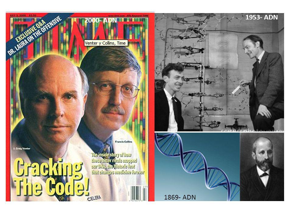 1869- ADN 1953- ADN 2000- ADN