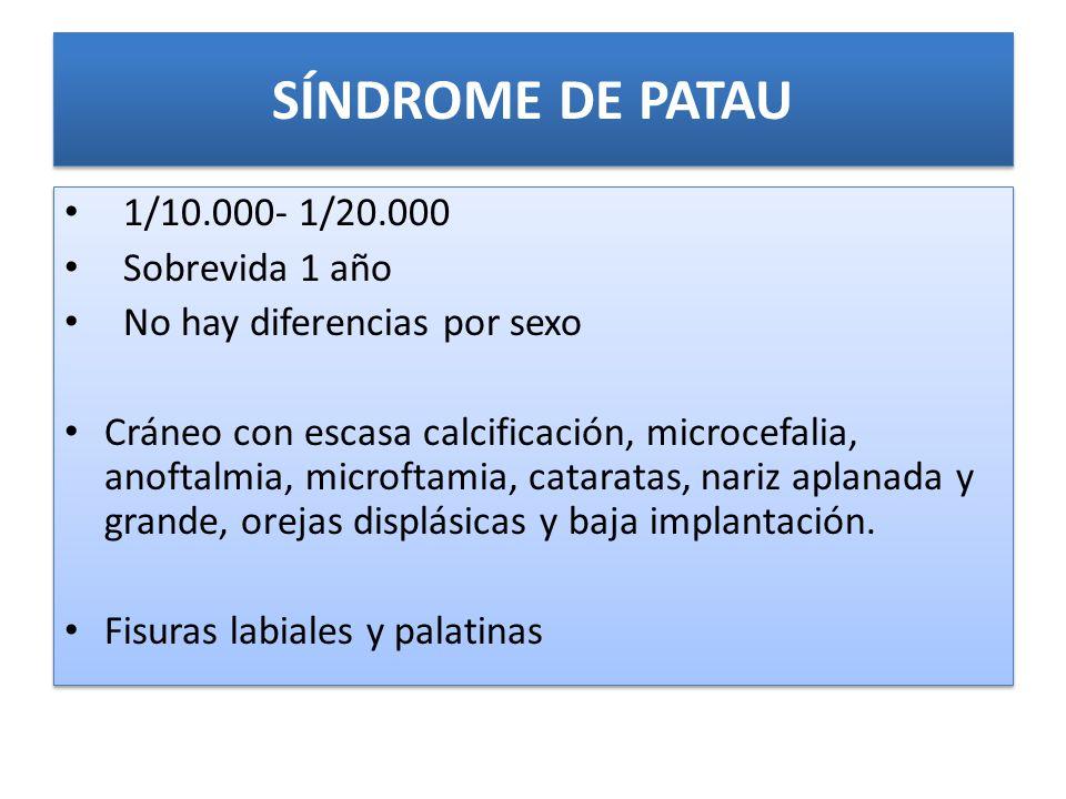 SÍNDROME DE PATAU 1/10.000- 1/20.000 Sobrevida 1 año No hay diferencias por sexo Cráneo con escasa calcificación, microcefalia, anoftalmia, microftamia, cataratas, nariz aplanada y grande, orejas displásicas y baja implantación.