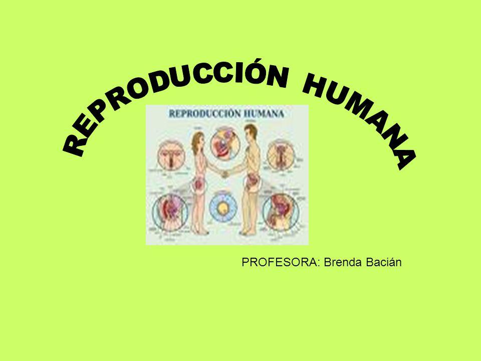 PROFESORA: Brenda Bacián