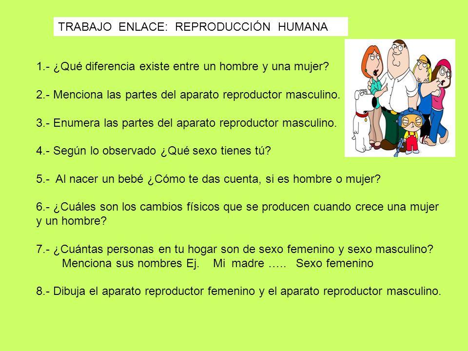 1.- ¿Qué diferencia existe entre un hombre y una mujer? 2.- Menciona las partes del aparato reproductor masculino. 3.- Enumera las partes del aparato