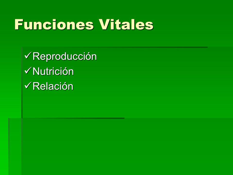 Funciones Vitales Reproducción Reproducción Nutrición Nutrición Relación Relación