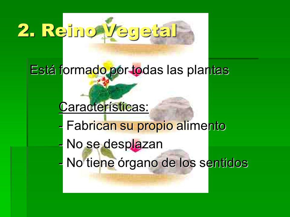 2. Reino Vegetal Está formado por todas las plantas Características: - Fabrican su propio alimento - No se desplazan - No tiene órgano de los sentidos
