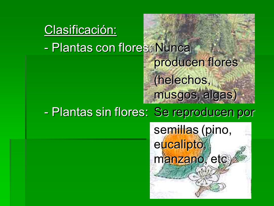 Clasificación: - Plantas con flores: Nunca producen flores (helechos, musgos, algas) - Plantas sin flores:Se reproducen por semillas (pino, eucalipto, manzano, etc)