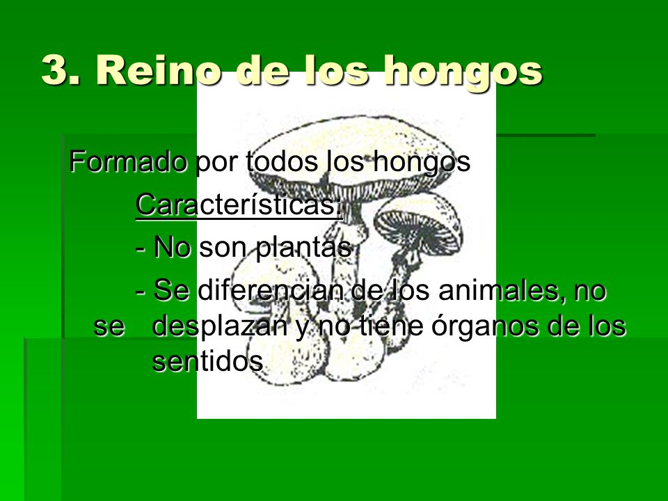 3. Reino de los hongos Formado por todos los hongos Características: - No son plantas - Se diferencian de los animales, no se desplazan y no tiene órg