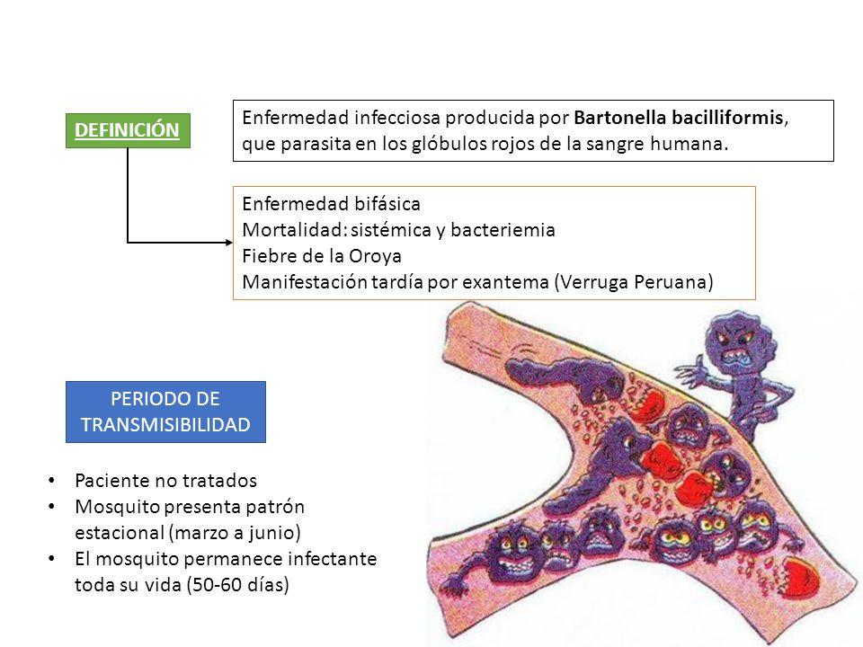 DEFINICIÓN Enfermedad infecciosa producida por Bartonella bacilliformis, que parasita en los glóbulos rojos de la sangre humana. PERIODO DE TRANSMISIB