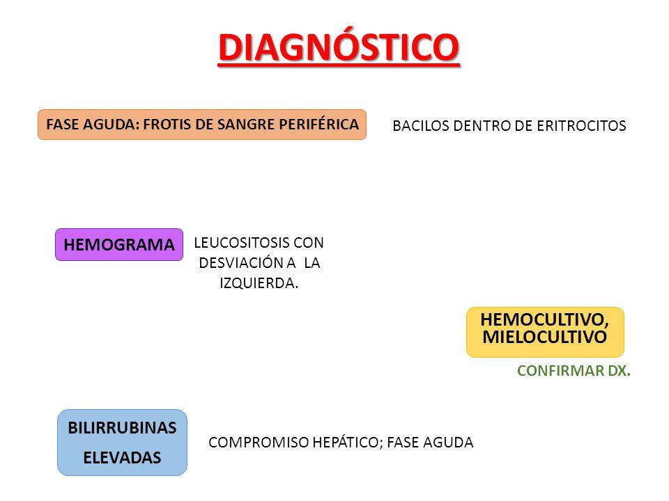 HEMOCULTIVO, MIELOCULTIVODIAGNÓSTICO BACILOS DENTRO DE ERITROCITOS LEUCOSITOSIS CON DESVIACIÓN A LA IZQUIERDA. CONFIRMAR DX. COMPROMISO HEPÁTICO; FASE