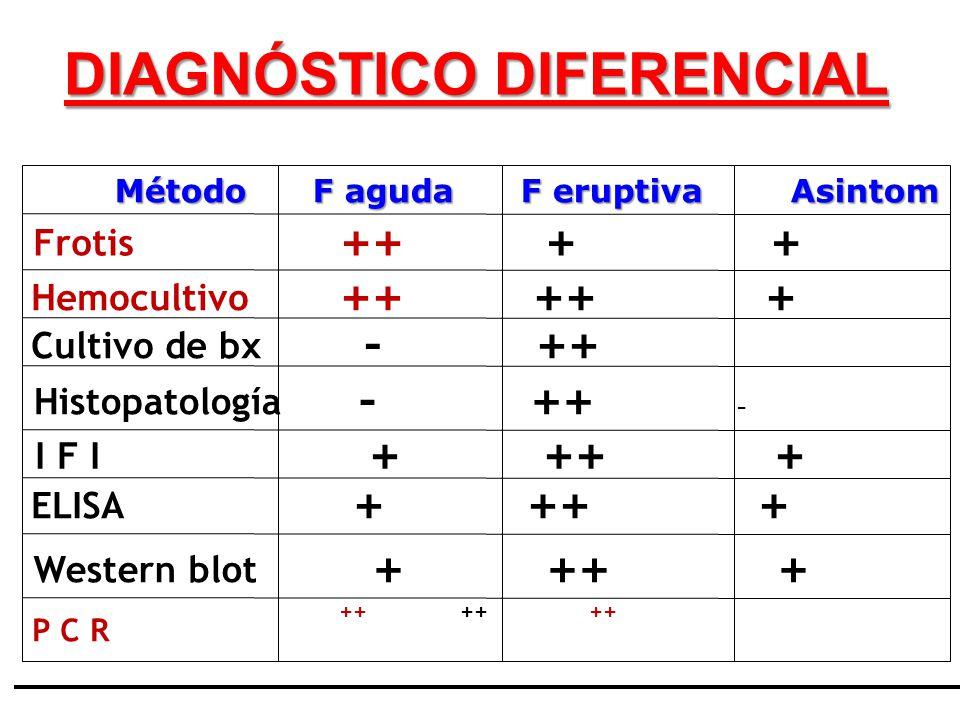 Método F aguda F eruptiva Asintom Histopatología - ++ - I F I + ++ + Cultivo de bx - ++ Frotis ++ + + Hemocultivo ++ ++ + Western blot + ++ + ELISA +