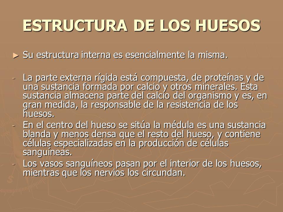ESTRUCTURA DE LOS HUESOS Su estructura interna es esencialmente la misma. Su estructura interna es esencialmente la misma. - La parte externa rígida e